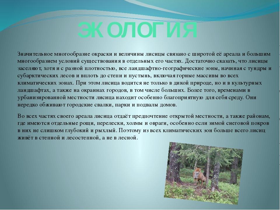 ЭКОЛОГИЯ Значительное многообразие окраски и величины лисицы связано с широто...