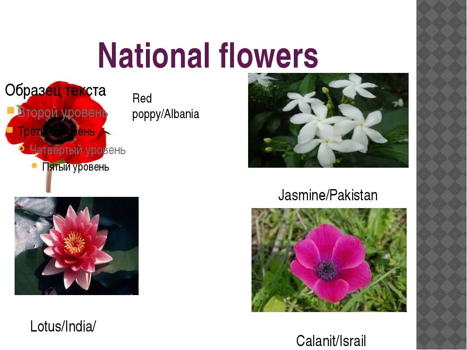 National flowers Red poppy/Albania Lotus/India/ Jasmine/Pakistan Calanit/Israil