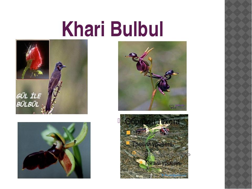 Khari Bulbul