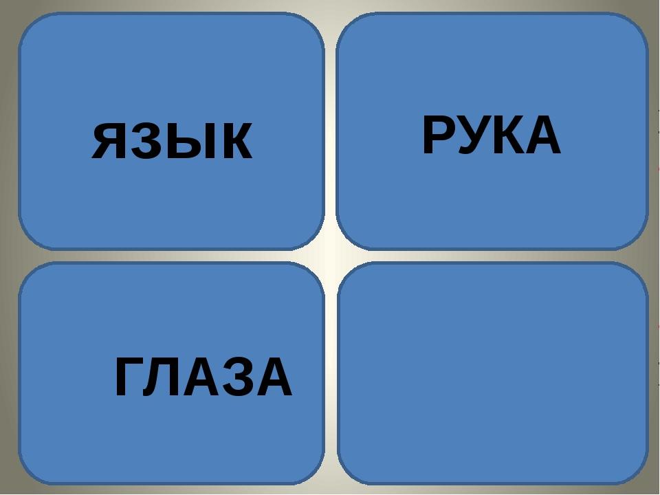 язык ГЛАЗА «Рука является вышедшим наружу мозгом» НЕМ. ФИЛОСОФ и. кант РУКА