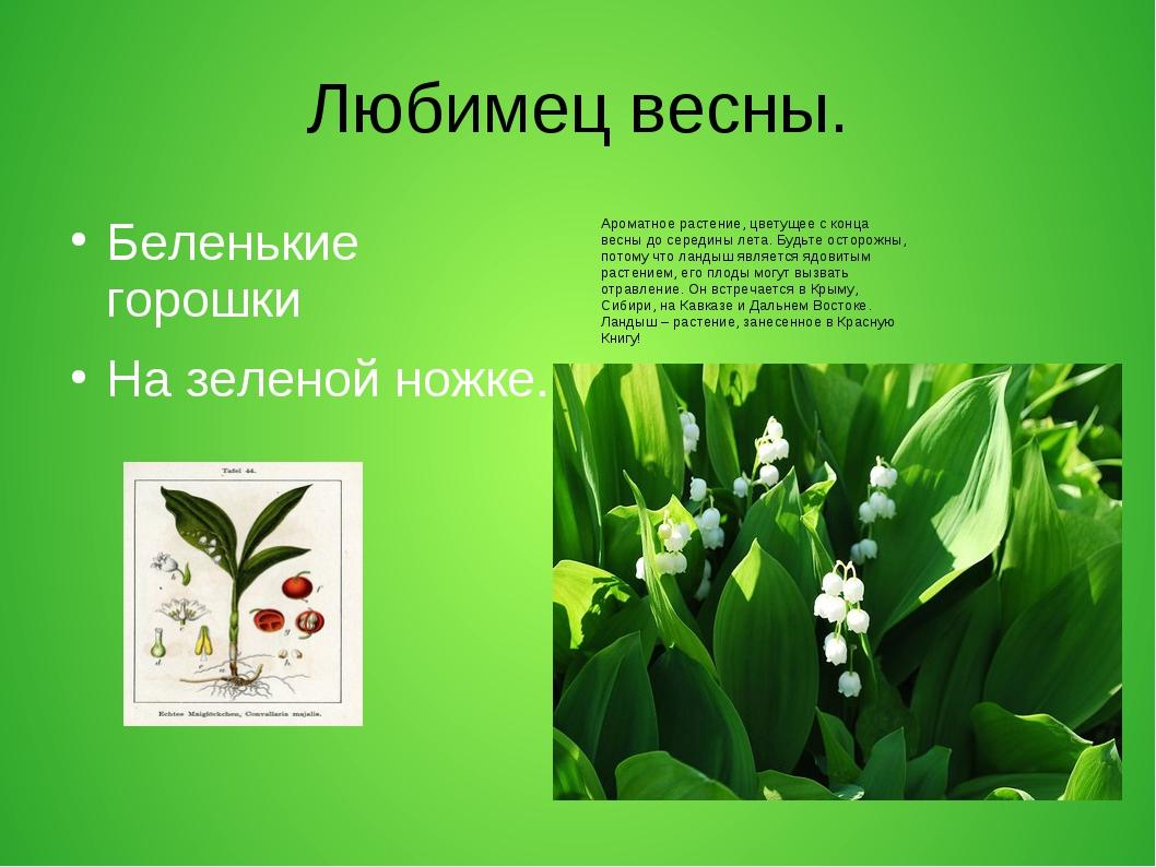 Любимец весны. Беленькие горошки На зеленой ножке. Ароматное растение, цветущ...
