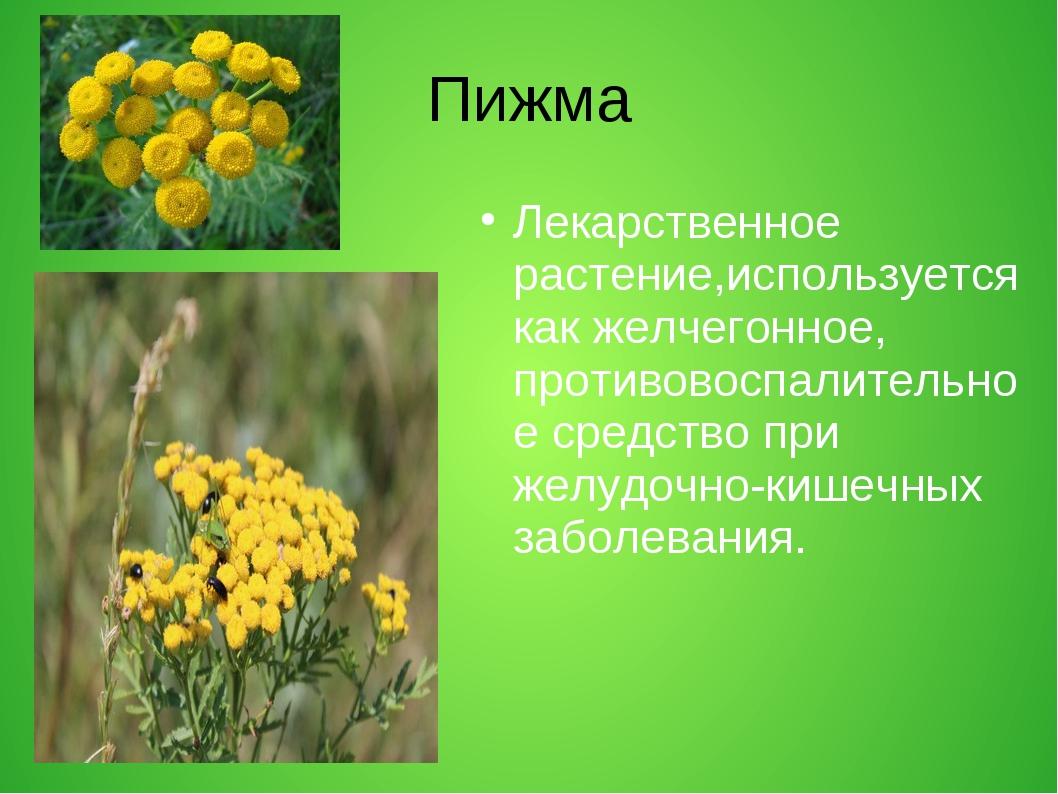 Пижма Лекарственное растение,используется как желчегонное, противовоспалитель...