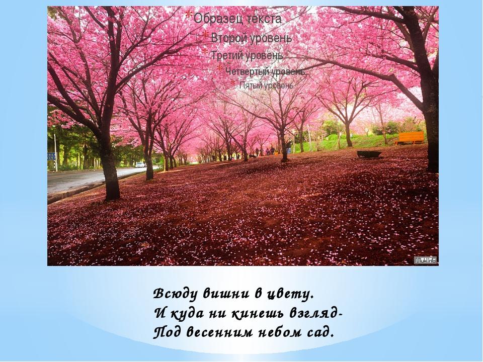 Всюду вишни в цвету. И куда ни кинешь взгляд- Под весенним небом сад.