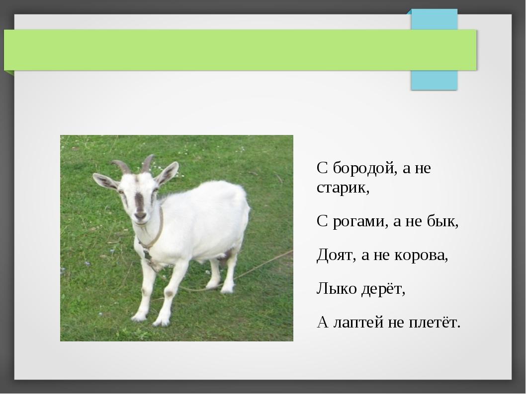 С бородой, а не старик, С рогами, а не бык, Доят, а не корова, Лыко дерёт, А...