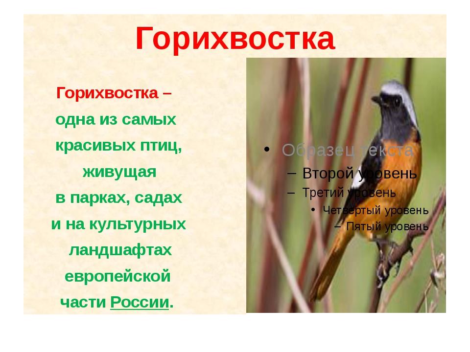 Горихвостка Горихвостка – одна из самых красивых птиц, живущая в парках, сада...
