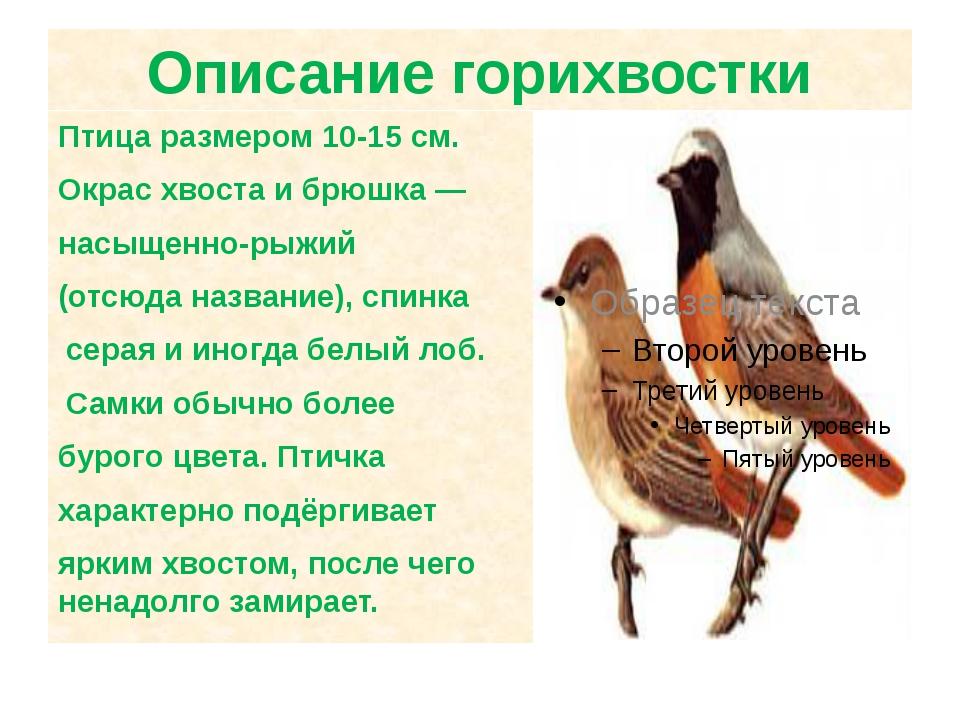 Описание горихвостки Птица размером 10-15см. Окрас хвоста и брюшка— насыщен...