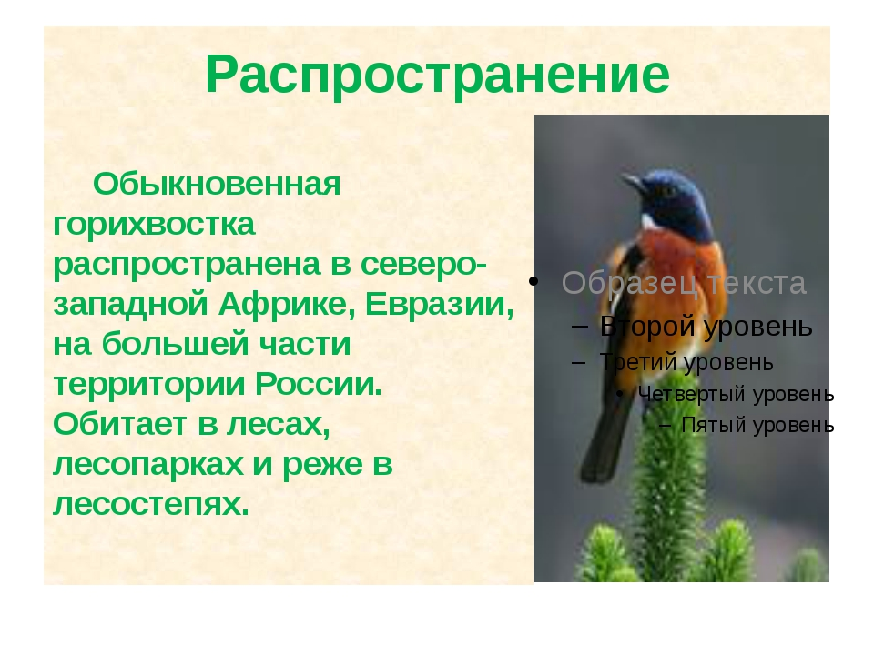 Распространение Обыкновенная горихвостка распространена в северо-западной Афр...