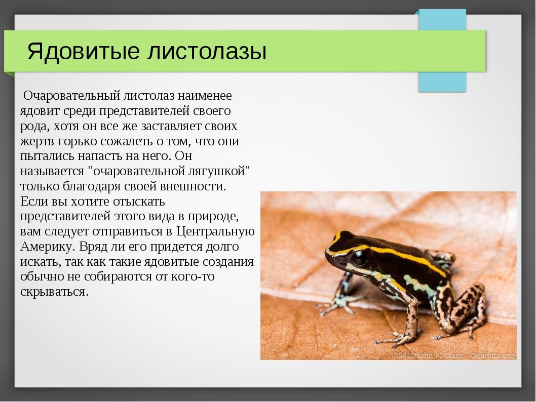 Ядовитые листолазы Очаровательный листолаз наименее ядовит среди представител...