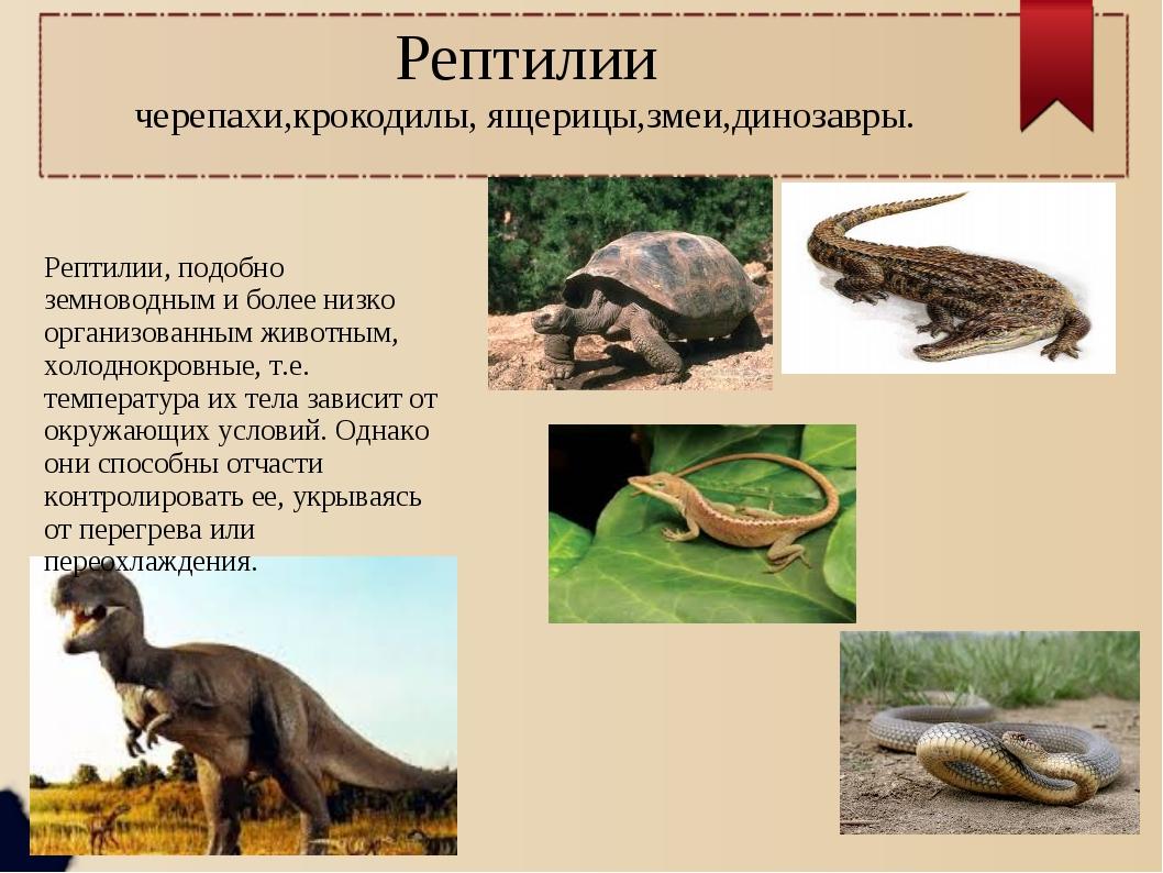 Рептилии черепахи,крокодилы, ящерицы,змеи,динозавры. Рептилии, подобно земнов...