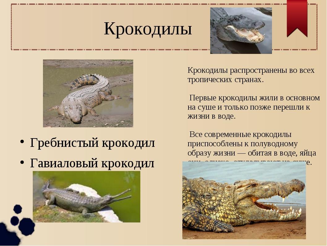 Крокодилы Крокодилы распространены во всех тропических странах. Первые крокод...