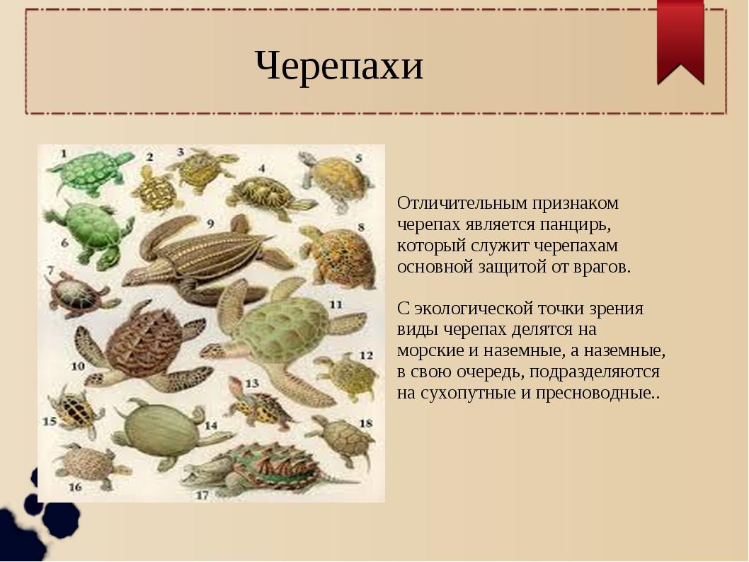 Черепахи Отличительным признаком черепах является панцирь, который служит чер...