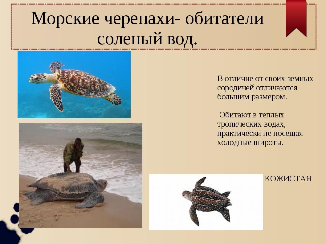 Морские черепахи- обитатели соленый вод. В отличие от своих земных сородичей...