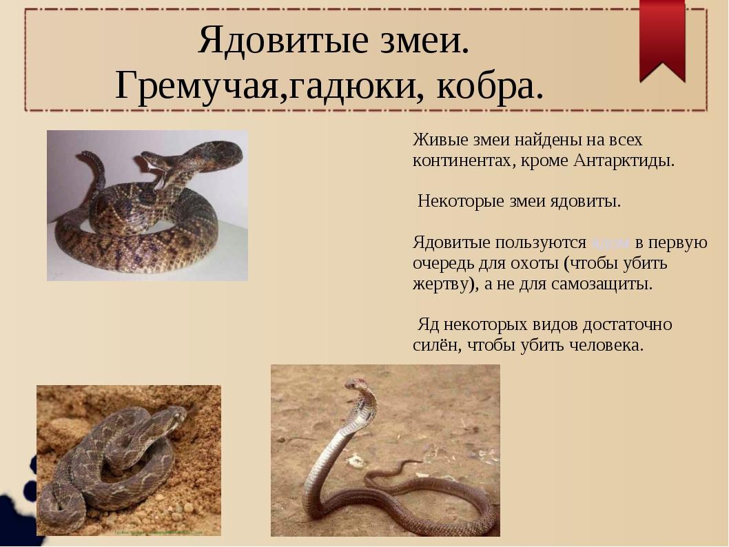 Ядовитые змеи. Гремучая,гадюки, кобра. Живые змеи найдены на всех континента...