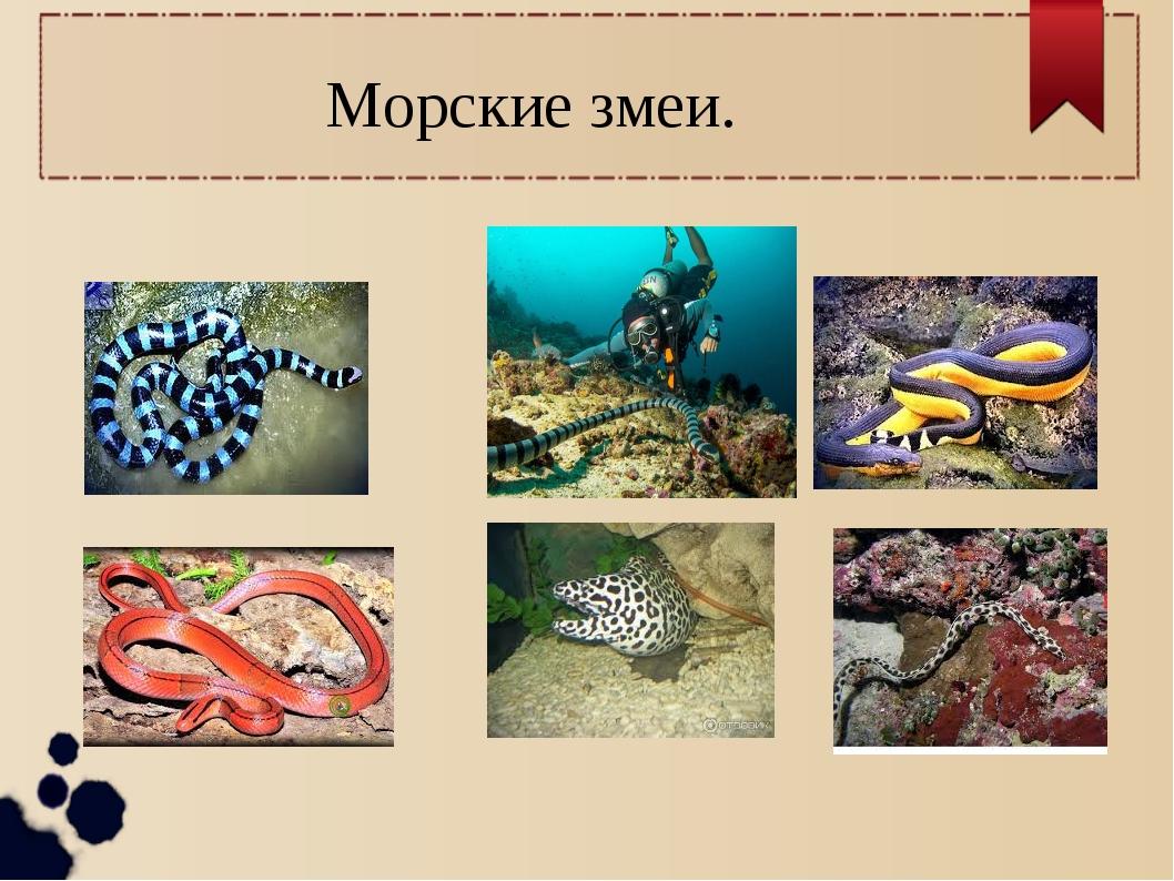 Морские змеи.