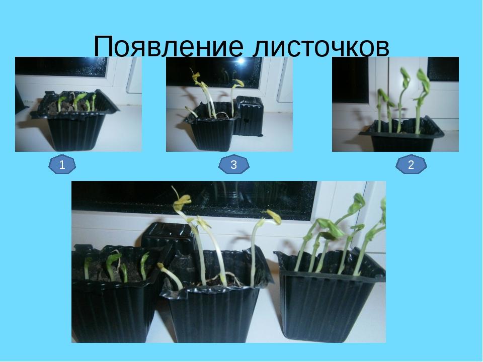 Появление листочков 1 3 2