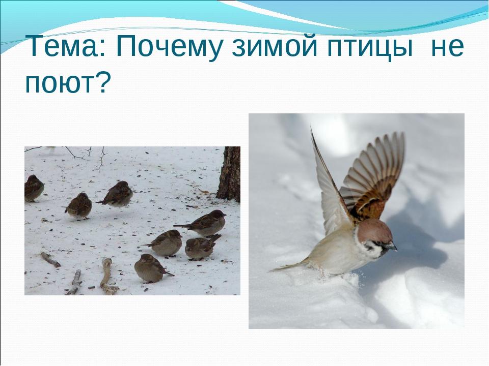 Тема: Почему зимой птицы не поют?