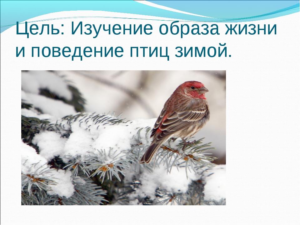 Цель: Изучение образа жизни и поведение птиц зимой.
