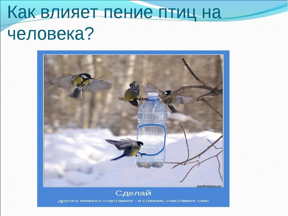Как влияет пение птиц на человека?
