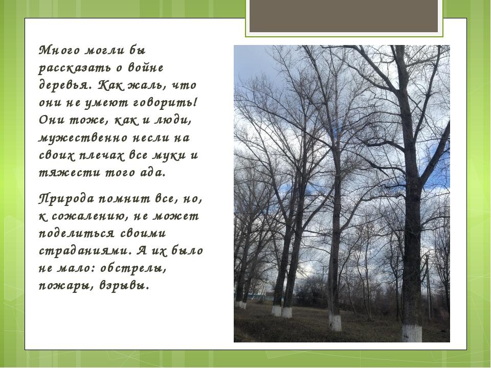 Много могли бы рассказать о войне деревья. Как жаль, что они не умеют говорит...