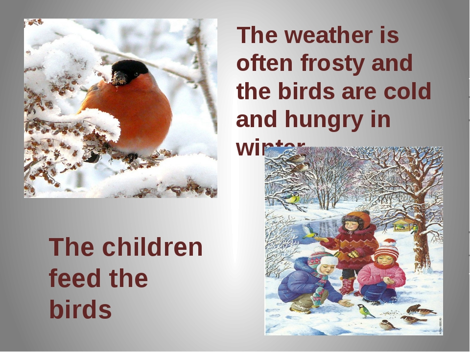 The weather is often frosty and the birds are cold and hungry in winter The c...