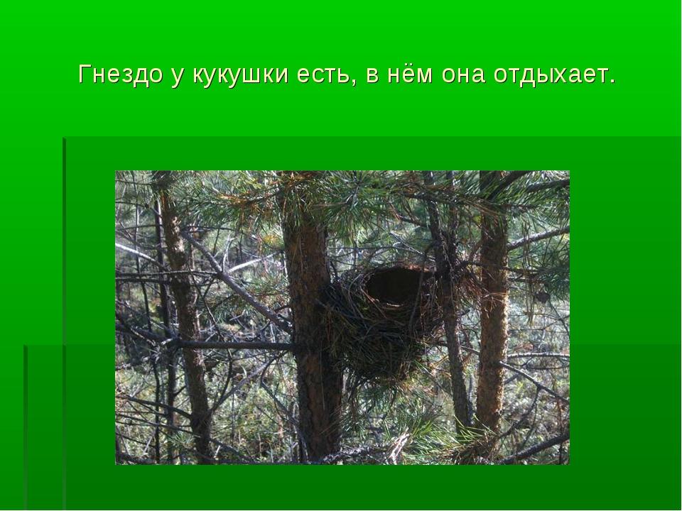 Гнездо у кукушки есть, в нём она отдыхает.