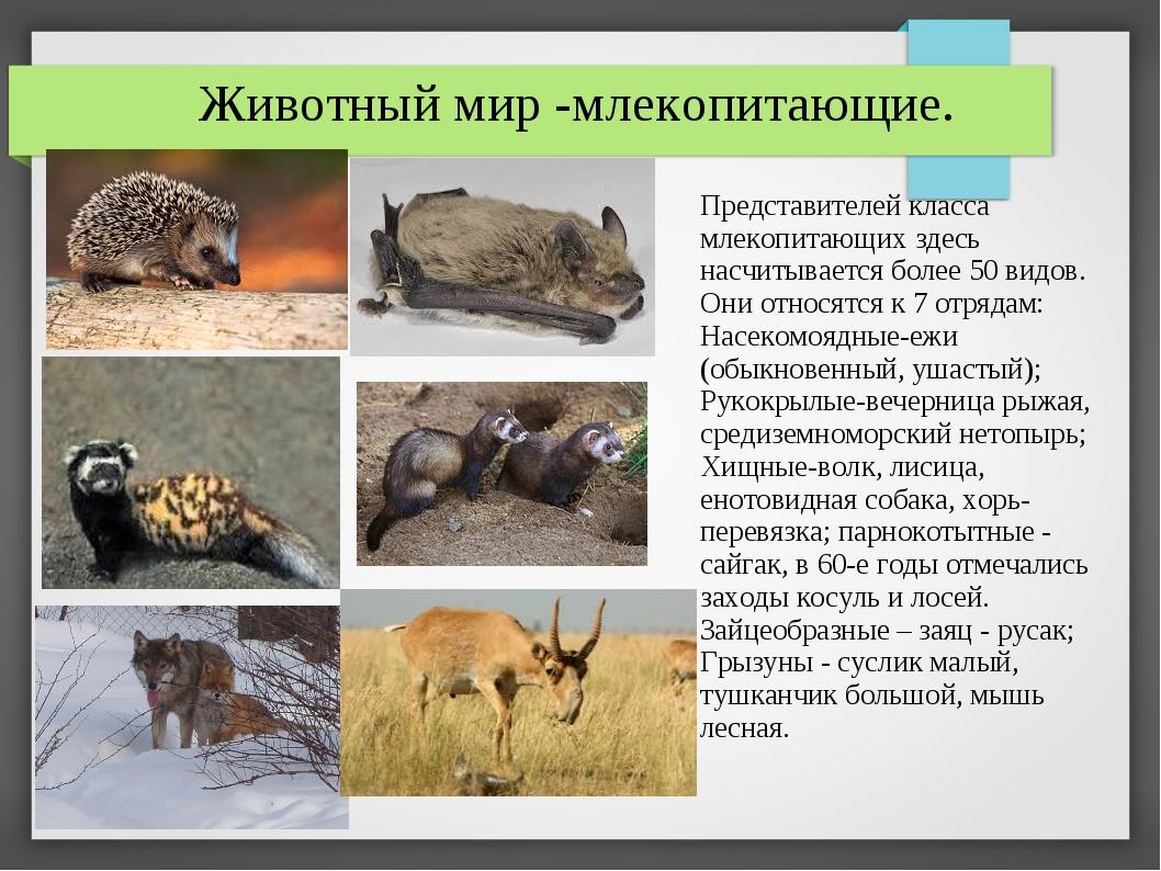 Животный мир -млекопитающие. Представителей класса млекопитающих здесь насчит...