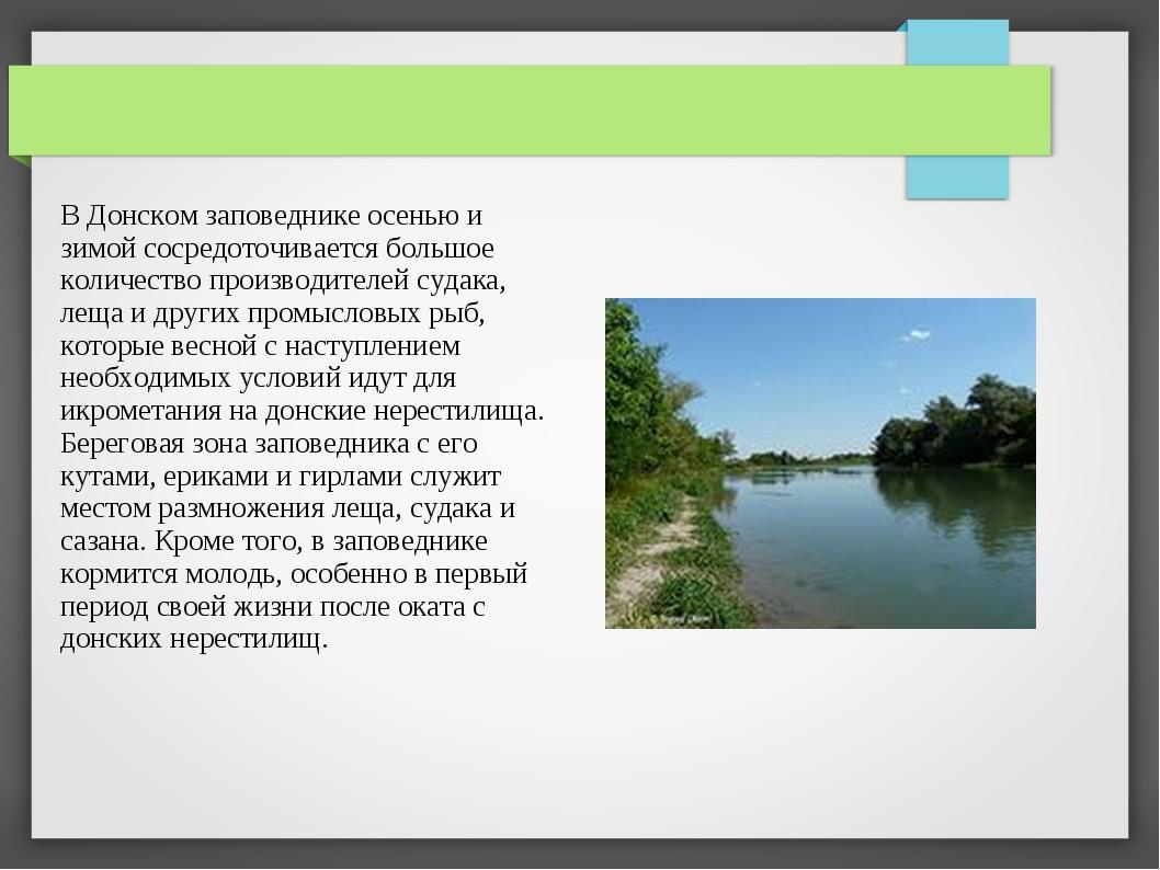 В Донском заповеднике осенью и зимой сосредоточивается большое количество про...