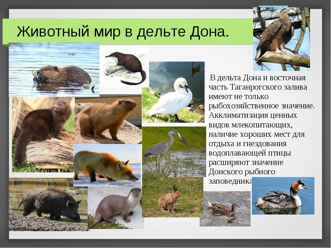 В дельта Дона и восточная часть Таганрогского залива имеют не только рыбохоз...