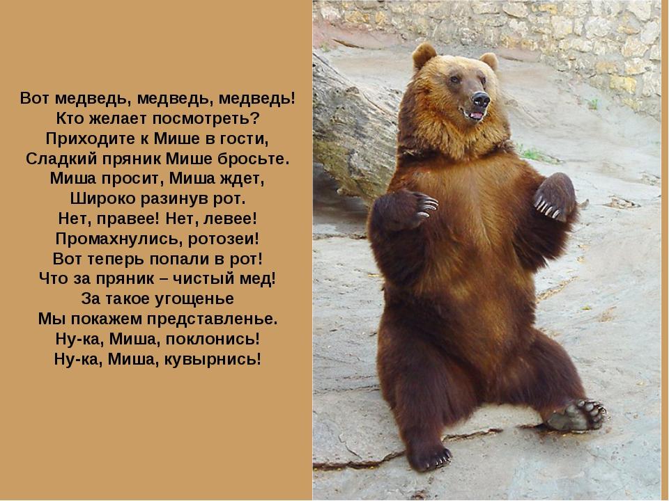 как нельзя поздравления про медведя весной прикол воротник обычно располагают